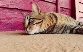 Картинка кошка, глаза, отдых, лежит