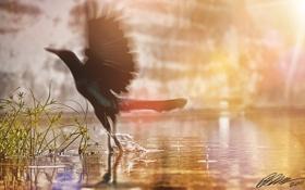 Картинка брызги, птичка, трава, солнце, крылья, вода, Bird