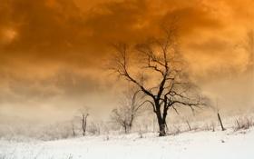 Картинка зима, небо, пейзаж, природа, дерево