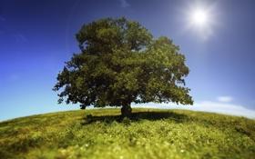 Обои небо, трава, солнце, пейзаж, природа, дерево, grass