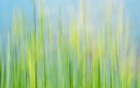 Обои трава, макро, розмытость