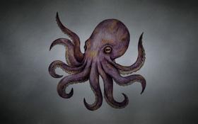 Картинка octopus, щупальца, темноватый фон, осьминог