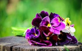 Обои цветы, пень, букет, размытость, анютины глазки