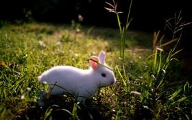 Обои природа, фон, кролик