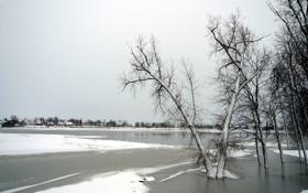 Обои лёд, снег, деревья