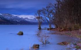 Картинка деревья, пейзаж, ночь, озеро