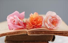 Обои цветы, розовая, роза, книги, старые, оранжевая, страницы