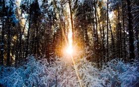 Картинка зима, лес, снег, деревья, закат
