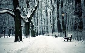 Картинка зима, город, парк, скамьи