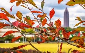 Картинка багрянец, город, осень, Атланта, листья, ветка, США