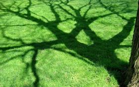 Картинка дерево, Зелень, тень