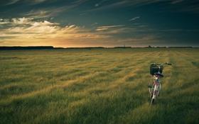 Обои поле, природа, велосипед, вечер, bike