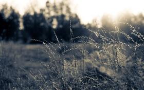 Картинка макро, свет, природа, фото, фон, обои, поляна