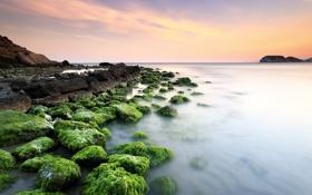 Обои море, небо, водоросли, камни, скалы