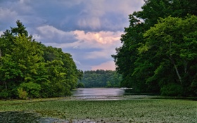 Картинка лето, трава, деревья, река, кувшинки, заводь
