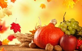 Обои осень, листья, урожай, виноград, тыква, autumn, still life