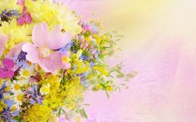 Обои лето, цветы, букет, daisies, drops