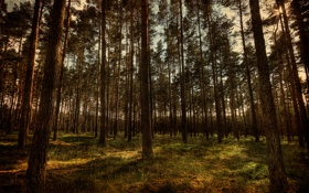 Обои природа, лес, hdr, деревья