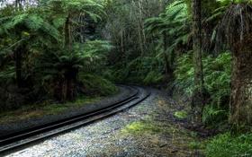 Картинка деревья, железная дорога, Тропический лес