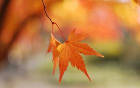 Картинка осень, макро, лист, блики, фон, ветка, розмытость