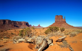 Обои песок, деревья, скалы, пустыня, сухие, каньон