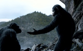 Обои обезьяны, Революция, Dawn of the Planet of the Apes, Планета обезьян