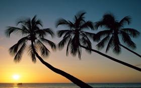 Картинка море, небо, солнце, закат, природа, пальмы