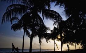 Обои пляж, закат, пальмы