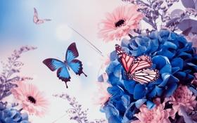 Обои бабочки, цветы, хризантемы, листики, гортензия, гербера
