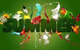 Обои лето, цветы, птицы, всплеск, яркие цвета, красивая надпись