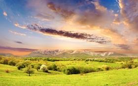 Обои зелень, небо, трава, облака, свет, деревья, горы