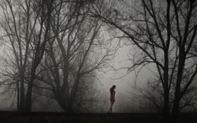 Обои девушка, деревья, туман, одиночество