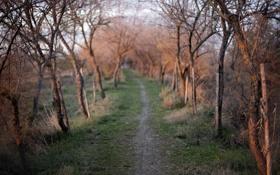 Картинка дорога, свет, деревья, природа, утро