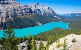 Обои лес, горы, небо, озеро, деревья