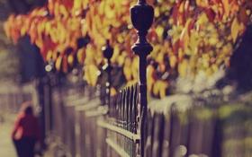 Картинка осень, листья, цвета, деревья, парк, настроение, яркие