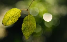 Картинка green, зелень, боке, листья, обои, растения, фон