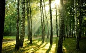 Картинка свет, деревья, природа, парк, дорожка