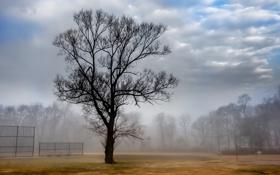 Обои пейзаж, туман, дерево, court