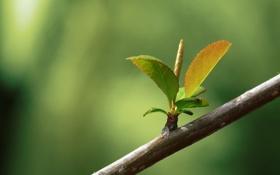 Обои листва, ветка, весна
