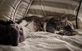 Картинка кошка, диван, игрушка, лежит