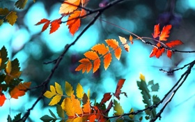 Обои листья, ветки, цвет