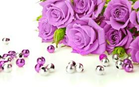 Обои цветы, розы, фиолетовые, бусины, бутоны