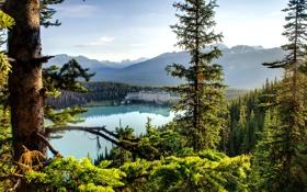 Картинка лес, небо, деревья, горы, природа, озеро, дом