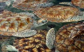 Картинка море, черепашки, панцирь, черепахи, плавают