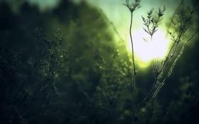 Обои растения, свет, трава, солнце