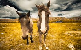 Картинка лето, природа, кони