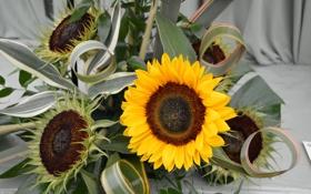 Обои цветы, подсолнух, букет, flowers, bouquet, sunflower