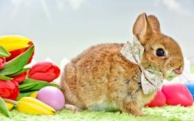 Обои цветы, праздник, кролик, пасха, тюльпаны, бантик, яички