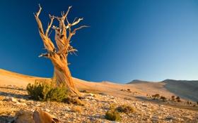 Обои песок, камни, холмы, пустыня, коряга, Пейзаж, сухое дерево