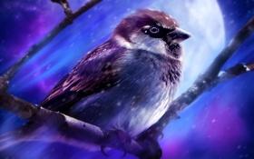 Картинка птица, ветка, арт, воробей